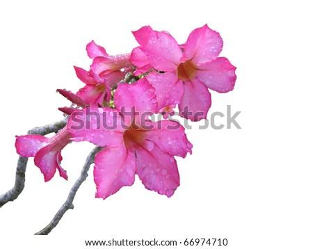 Fleur tropicale - stock photo