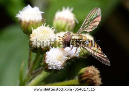 Flies cause diseases. Flies fruit. - stock photo