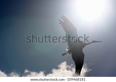 Flight of a white stork in autumn sky