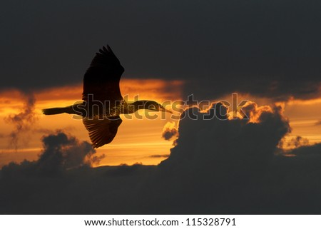 Flight of lonely great cormorant over atlantic ocean at orange sunset (photo composition)