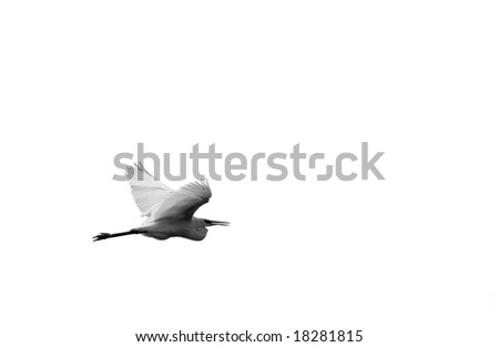 Flight of stork in the blue sky. - stock photo