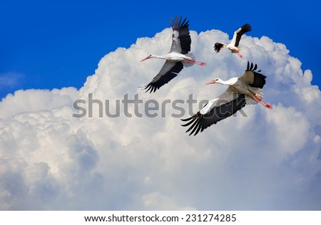 Flight of storks  - stock photo