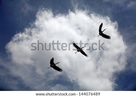 Flight of the crane across a blue cloudy sky.  - stock photo
