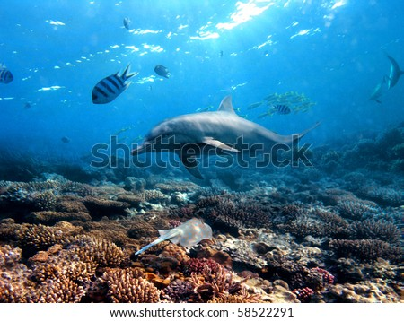 Flipper playing in sun-rays at the coral reef shallow with blue spotted stingray - stock photo