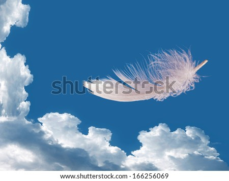 Floating feather over sky - stock photo