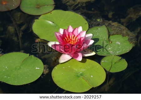 floating flower - stock photo