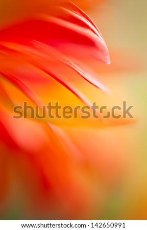 Floating  Gerbera , Daisy petals macro abstract - stock photo