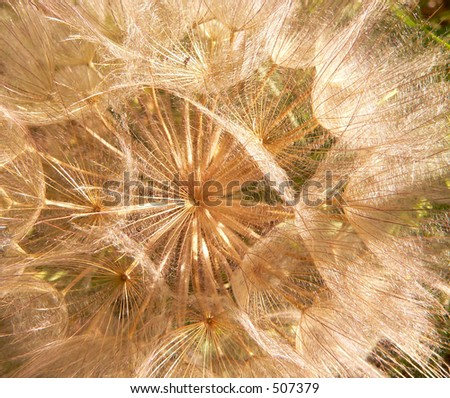 floating in sun rays - stock photo
