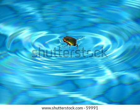 Floating June Bug - stock photo
