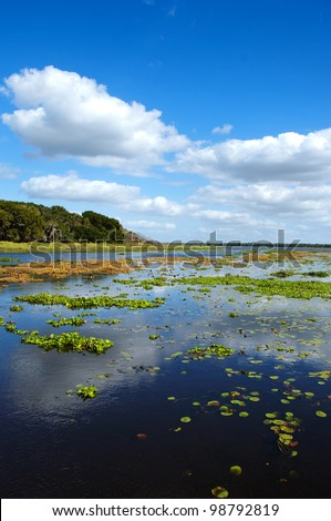 Floating water hyacinths, which are classified as a noxious weed, on Upper Myakka Lake in central Florida. - stock photo