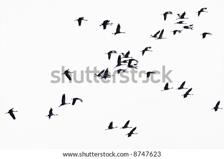 Flock flying to the sun. - stock photo