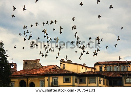 Flock of birds about Lucca - stock photo
