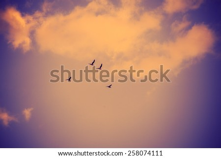 flock of birds against the sky with clouds