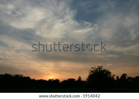 Flock of birds flying at sunset over silhouetted trees, Marshlands Conservancy, Rye, New York