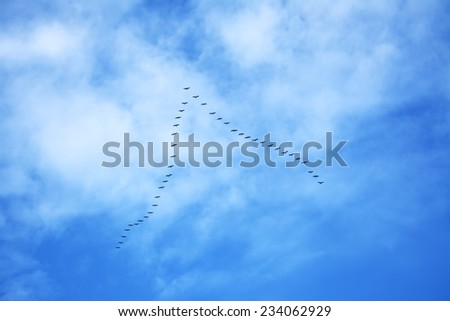 flock of birds flying in formation - stock photo