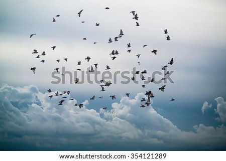 flock of birds flying in the sky against a backdrop of clouds - stock photo