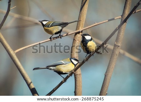 Flock of birds in spring time. Natural background - stock photo