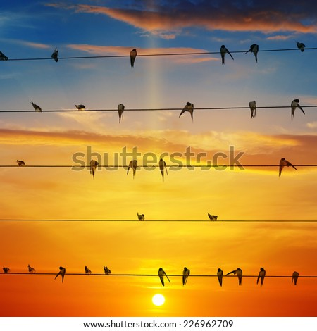flock of birds on a background of sunrise - stock photo