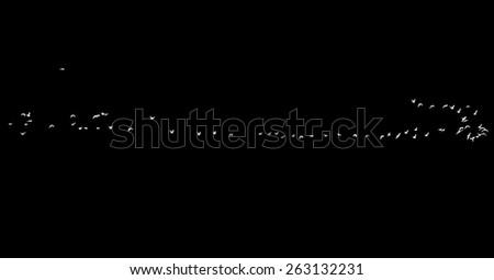 flock of birds on a black background - stock photo