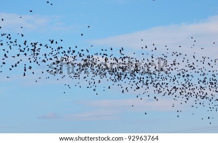 Flock of birds on blue sky - stock photo