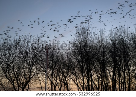 Flock of birds on blue sky and in tree tops.