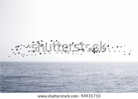 Flock of birds over the sea - stock photo