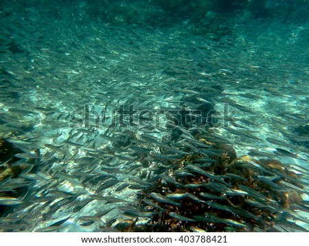 flock of fish on the coral reef