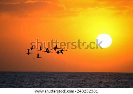 flock of flamingos flying at sunset under a bright sun - stock photo