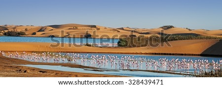 Flock of flamingos in a lagoon surrounding by sand dunes on Pelican Point, Walvis Bay, Namibia