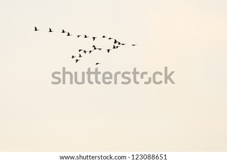 Flock of flying birds - stock photo