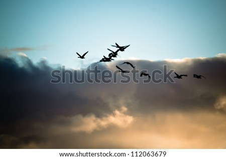 Flock of flying geese silhouette - stock photo
