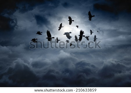 Flock of flying ravens, crows in dark moody sky - stock photo