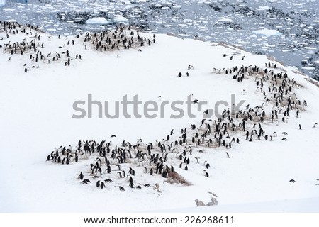 Flock of penguins in ANtarctica - stock photo