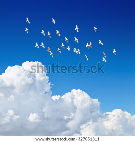 flock of pigeons flying in blue sky among the clouds