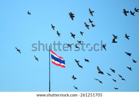 Flock of pigeons on blue sky, Thailand flag on flagstaff - stock photo