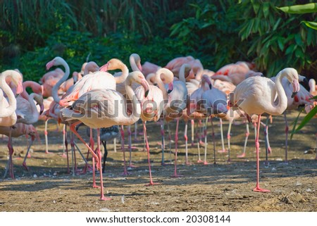 Flock of pink flamingos against a trees - stock photo