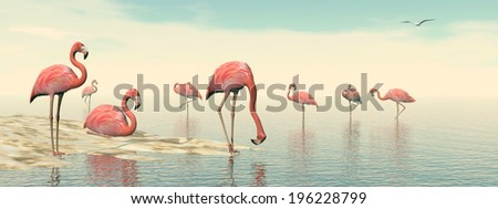 Flock of pink flamingos at the beach by daylight - stock photo