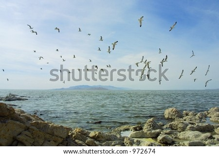 Flock of seagulls flying over a secluded inlet on Antelope Island near Syracuse, Utah. - stock photo
