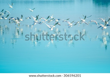 Flock of seagulls flying over lake, reflection of birds on water surface - stock photo