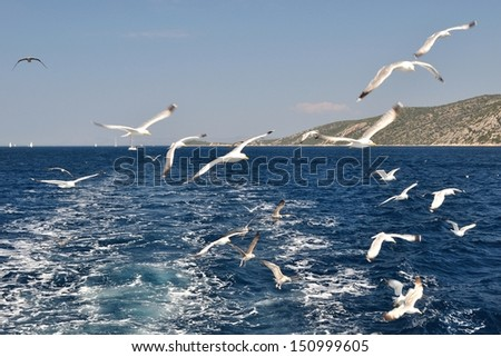 Flock of seagulls flying over sea behind the ship - stock photo