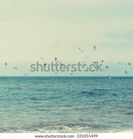 Flock of seagulls flying over the blue ocean