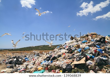 Flock of seagulls over landfill - stock photo