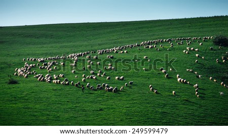 Flock of sheep grazing in a hill  - stock photo
