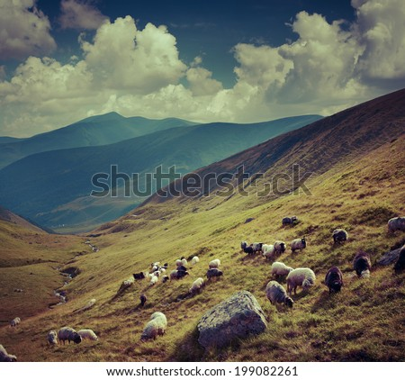 Flock of sheep  in the mountains. Retro style. - stock photo