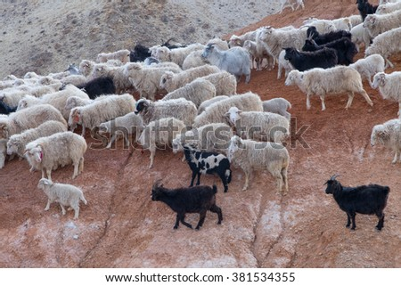 Flock of sheep on the hillside - stock photo