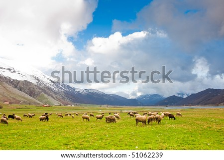 Flock of sheep on the pastures at the Matese Lake in Italy - stock photo