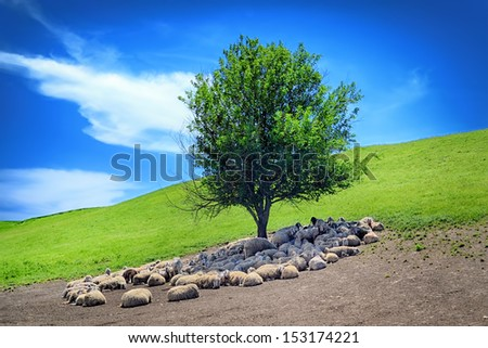 Flock of sheep under the tree - stock photo