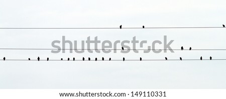 flock of starlings standing on the electric wires - stock photo