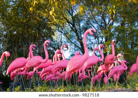 The pink flamingo essay