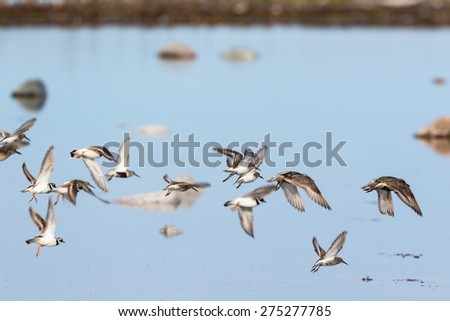Flock of wading birds flying at the shore - stock photo